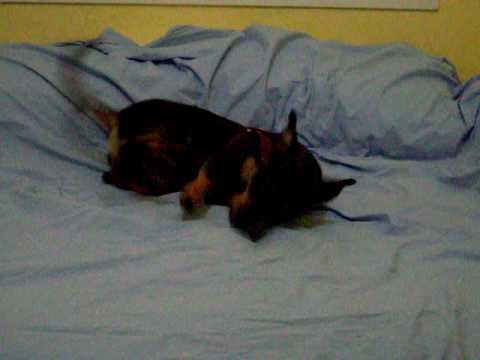 Mikau, o cachorro do Magdu