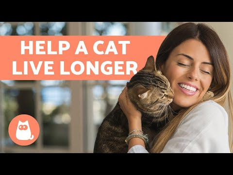 How to make a cat LIVE Longer 🐈 10 Helpful TIPS