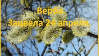 Календарь медоносов апреля, медоносы Казахстана в Акмолинской области