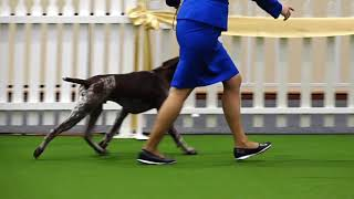 2017 Royal Adelaide Show Dog Arena   Day 8