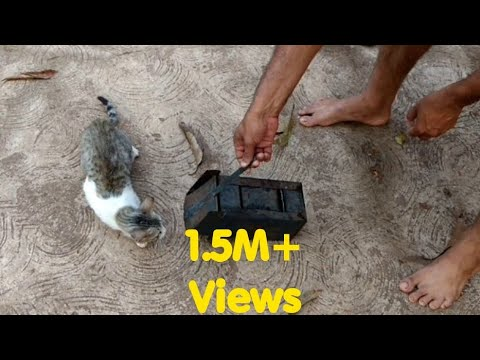 How Cat Catch Mouse(in Slow Motion)