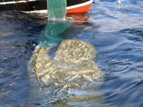 Good hauls 2010(north sea pair trawling)