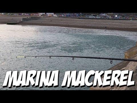 THE BIGGEST MACKEREL SIGHTING IN YEARS!! - Brighton Marina Mackerel Fishing