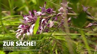 Orchideen-Klau in der Ortenau | Zur Sache! Baden-Württemberg