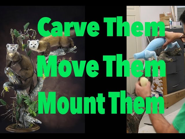 Pine Martens , carved Foam body with moveable legs. Art of Taxidermy