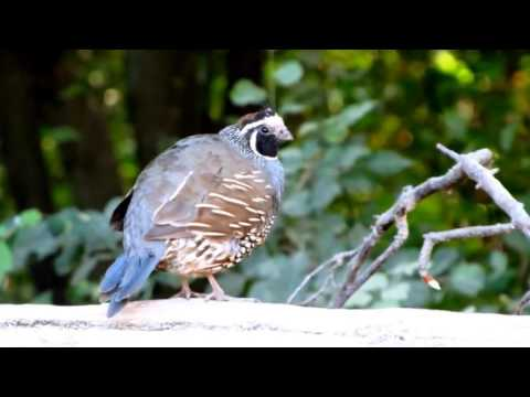 El avistaje de aves, una nueva manera de relacionarnos con la naturaleza