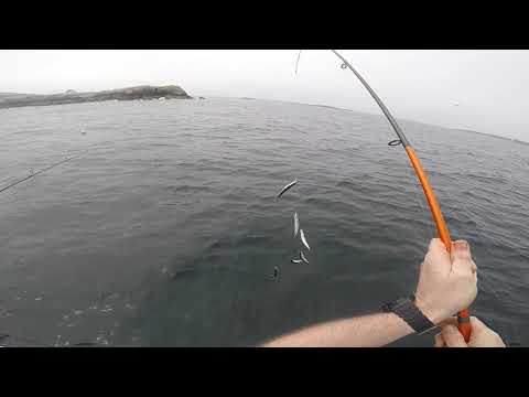 Eastman's Fishing Fleet - Mackerel Massacre Independence Day 2020!