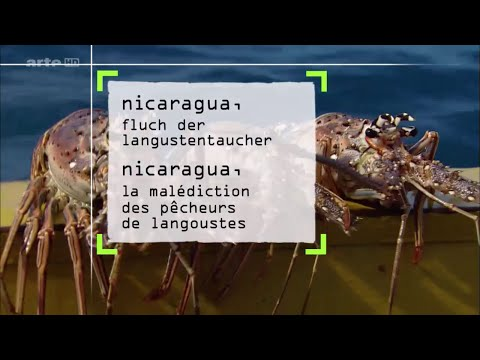 360° GEO REPORTAGE Nicaragua - Fluch der Langustentaucher | ARTE Doku [HD]
