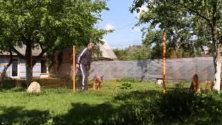 Флостон дог — гостиница для собак в Минске.