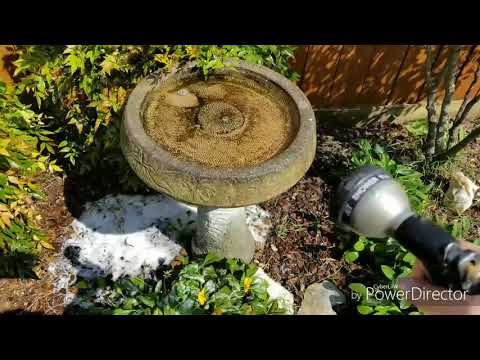 How To Clean A Birdbath . No Harsh Chemicals Needed.