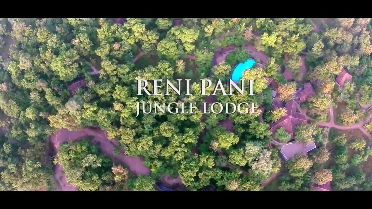 asiatiska djungel kön