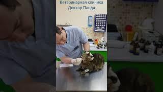 Кормление кошки с сахарным диабетом.