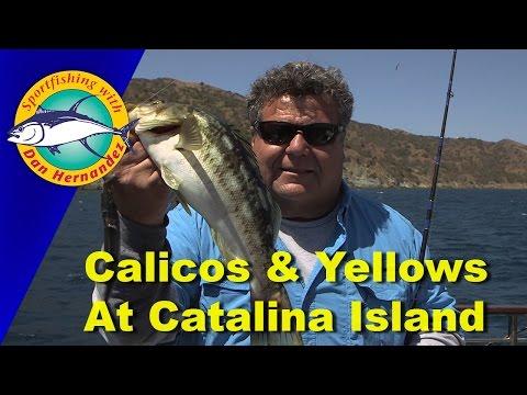 552 Gail Force Fishing At Catalina Island | SPORT FISHING