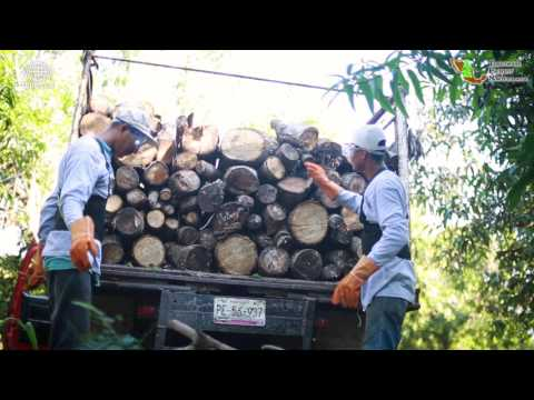 Sustainable Tobacco Production