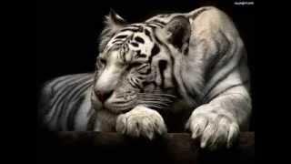 tygrysy, delfiny i inne zwierzeta