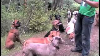 Auckland Dog Training