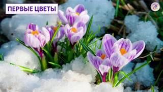 Неживая природа весной