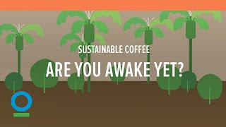 Sustainable coffee: Are you awake yet? | Conservation International