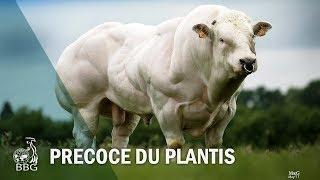 PRECOCE DU PLANTIS - Portes ouvertes BBG 2017