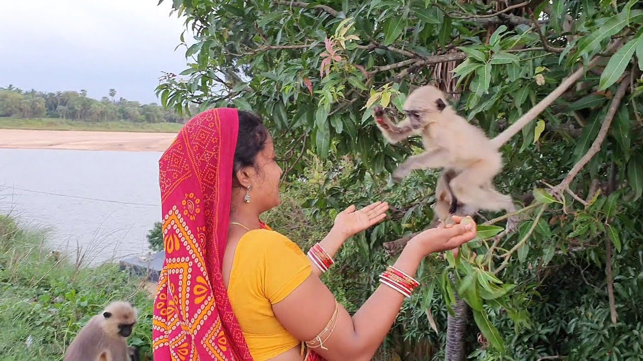 Heart touching moments between this baby langoor and this human mother during feeding