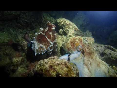 Vanuatu Night Dive August 2016