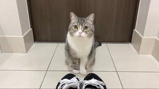 甘えんぼ猫が「行くな」と通せんぼするので今日は仕事をサボりますw