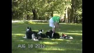 Obedience Trained Dogs - Riju Dawg Skool