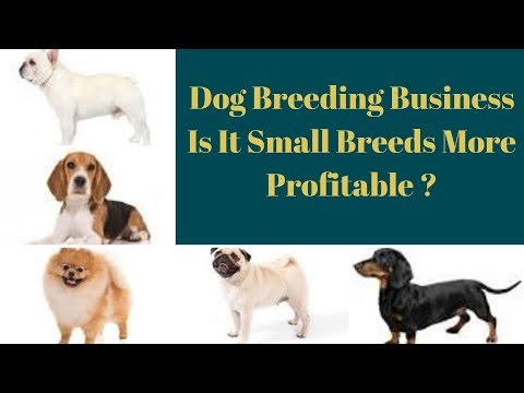 Dog Breeding Business-Is It Small Breeds More Profitable ?
