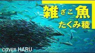 「雑魚」たくみ稜 cover HARU
