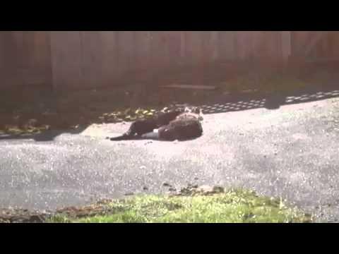 Catfight In Backyard Next Door Youtube