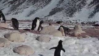 Penguins and seals on Paulet Island, Antarctica.