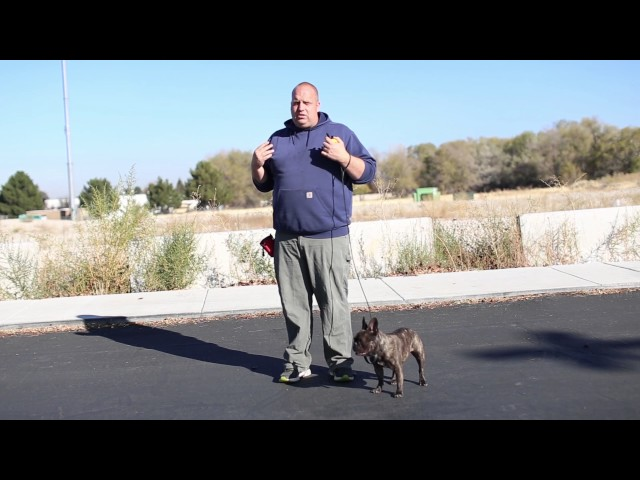 Transformations- How to Train an Aggressive French Bulldog- Online Video Training