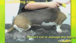 Furminator Helps Reduce Shedding