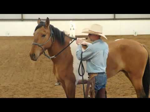 Groundwork Basics Demo New Mexico Trainers Showcase / Horse Expo
