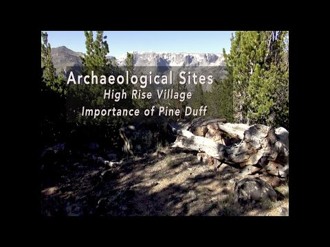 Archaeological Sites: High Rise Village - Importance of Pine Duff