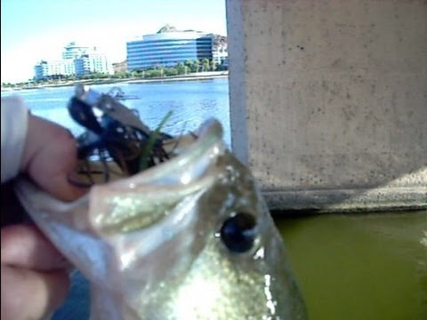 Chatterbait fishing at tempe town lake youtube for Tempe town lake fishing