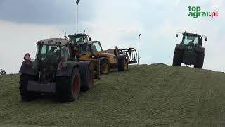Zbiór kukurydzy na kiszonkę w Kombinacie Rolnym Kietrz