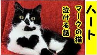 👀【捨て猫 保護】幸せを運んで来てくれたハートマークの捨て猫「まりあ」のお話・招き猫ちゃんねる thumbnail