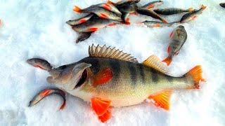 Окунь ГИГАНТ Вот это да Весенняя рыбалка на Озере Рыбалка на косынку экран зимой в Сибири