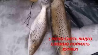 Рыбалка на  Ч речке. Ловля . Финский залив кумжа Nikon COOLPIX P500 super zoom  BNN_film#2