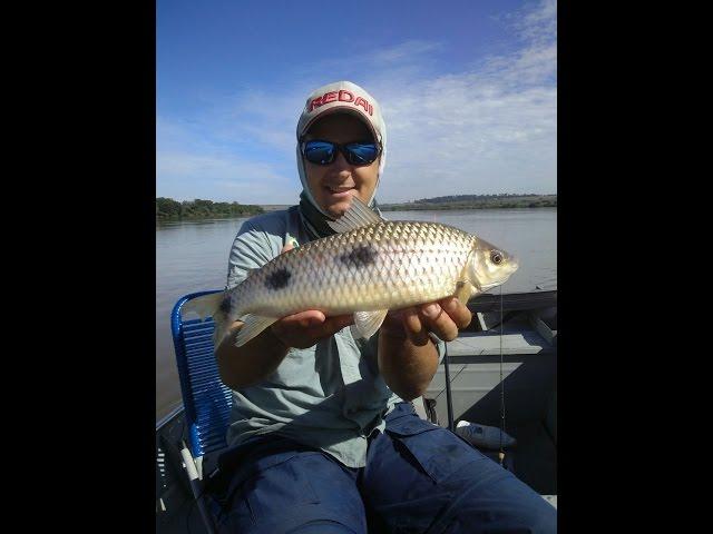 Programa Mundo da Pesca - PGM 37 - Piau 3 Pintas Paranapanema