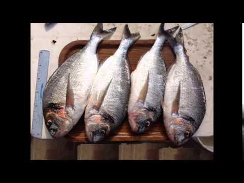 pêche2014 port saint louis.