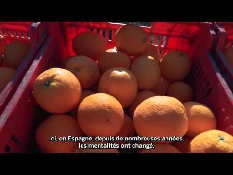 Transgourmet - Oranges