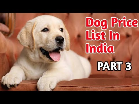 Dog Price List In India 2019 / Part-3/ Dog Price List