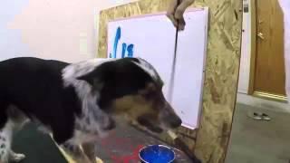 Собака пишет на доске свою кличку