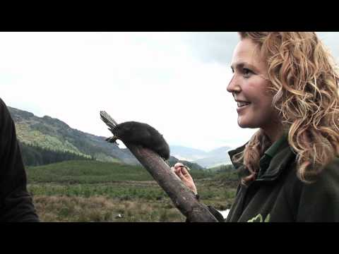 Trossachs Water Vole Project