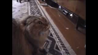http://www.youtube.com/watch?v=oKI-tD0L18A.