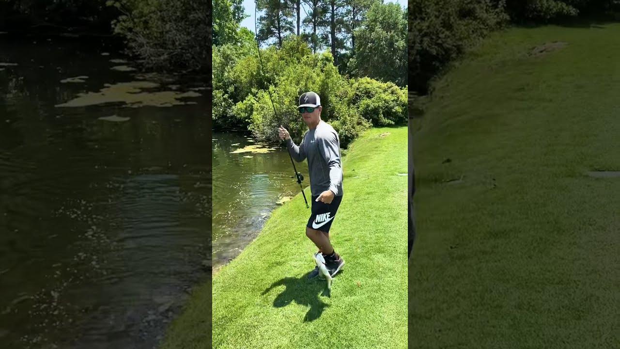 FISH EATS FROG! #Shorts
