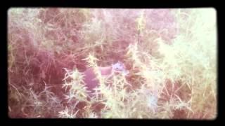 видео Euphoria Retreat