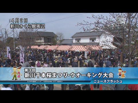 第3回新川千本桜まつり・ウオーキング大会